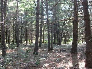 HUGE ACREAGE WITH YEAR-ROUND ROAD !!!