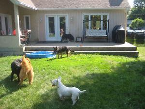 Pension / garderie pour vos animaux en milieu familial