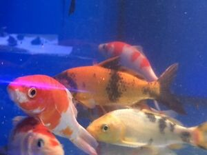 Aquagiant New Fish Arrived, Big Weekend Sale 20 to 50% Off!