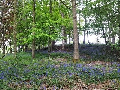 Charming Bluebells Chirk Castle North Wales