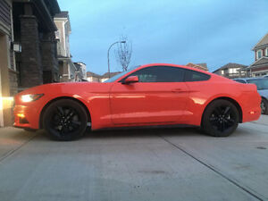 2016 Ford Mustang Coupe 2.3L EcoBoost with Performance Package