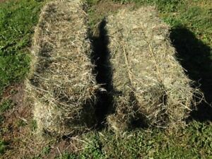 Quality square hay bales Ft Sask area