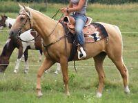 Pretty Palomino Mare Broke Western