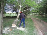 Tree Surgery & Fence Reparing Service