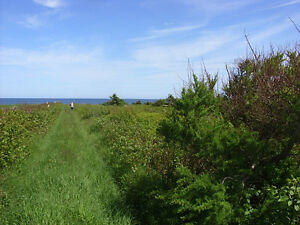 Sea Cow Pond near North Cape Prince Edward Island Real Estate PE