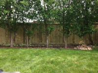 Pressure Treated Fences – Screws Only – $26/ft - Oilers take G1!