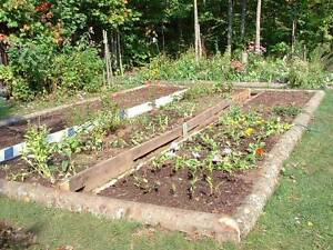Wanted: vegetable garden patch in Lower North Shore Cammeray North Sydney Area Preview