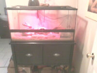BEARDED DRAGON, TERARRIUM, ACCESSORIES AND STAND