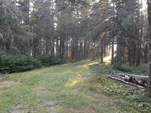 5 Acres and Camp on Collier Mountain Road