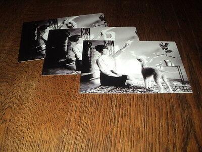 SHEILA LOT DE PHOTOS FORMAT 10*15 N&B - THEME 035 CANICHE - 3 PRISES