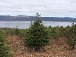 Christmas Tree Farm, Pynn's Brook-Perry Butt-NL Island Realty