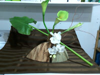 Orchid-Calla lily-  decoration