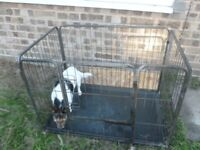 Dog cage and puppy run