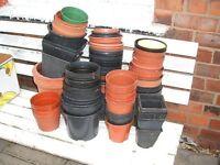 Plant Pots - Used