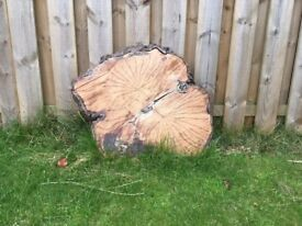 Large wooden log slices