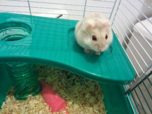 Two Sweet Hamsters Looking For A New Home