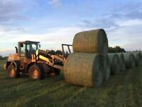 Hay for sale delivered/Green feed/1600lb bales