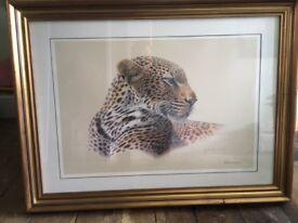 Framed picture of Jaguar
