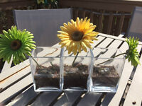 3 PC GLASS IKEA VASES WITH PEARL ROCKS AND GERBER DAISIES - $5