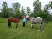 Fun and Safe Horseback Riding Lessons