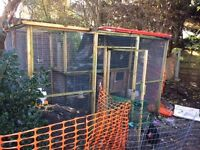 Chicken Coop with Hens and Aviary/Run