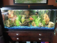 55 Gal Fish Tank & Stand Complete REDUCED PRICE.. MUST GO!