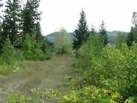JUST LISTED! Level .35 Acre Building Lot in Grizzly Heights