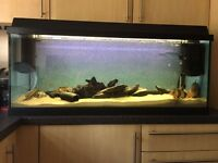 Beautiful glass aquarium with hood and many extras. Width 1m (39cm)