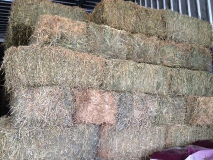 Grassy Lucerne Hay Somersby Gosford Area Preview