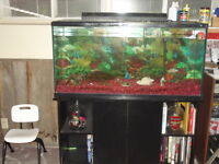 70 gal. Hagen tank and stand