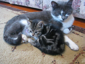 Playful cute family raised kittens