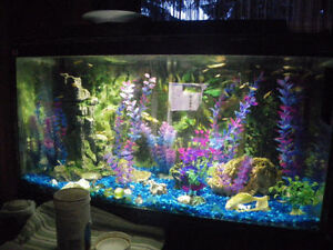 unwanted aquarium fish need
