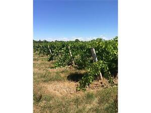 22Acre Vineyard in Niagara  5min from the QEW