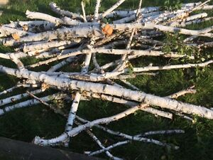 Birch branches for Decoration, Planters and Weddings
