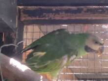 Various birds for sale Stratford Wellington Area Preview