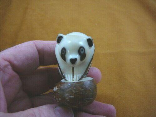 (TNE-BEA-PA-209C) Panda BEAR TAGUA NUT Figurine Carving Vegetable palm pandas