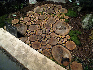 Rustic Wedding Decor--wood slices, cake stands.... Kitchener / Waterloo Kitchener Area image 5