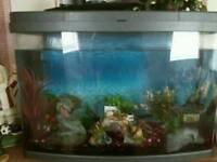 2ft full set up fish tank