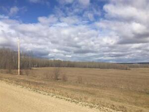 1/4 SECTION VACANT HAY LAND!! EASY TO FARM!! BEAUTIFUL HAY CROP