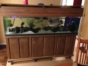 120 Gallon Fish Tank with Canopy and Cabinet