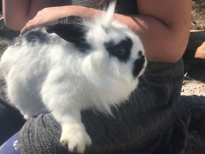 Rabbits/ bunnies for sale