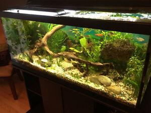 75 gallon full setup - freshwater