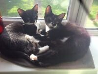 2 ADORABLE KITTENS FOR ADOPTION -LOVING HOME NEEDED FOR BOTH TOGETHER