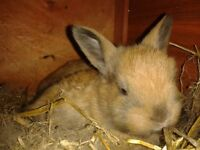 Beatiful baby rabbits for sale of various colours.