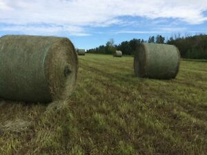 Quality Horse Hay for Sale!