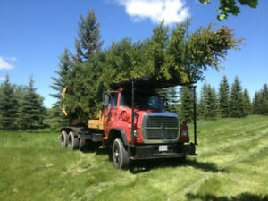 Large Tree Moving, Delivery & Install