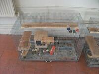 Male Chinchilla With Cage