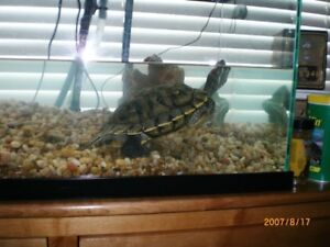 20 gallon fish tank and turtle for sale