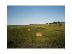Pasture land fenced for cattle on 175.5 acres near Elphinstone!