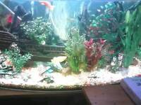 I have a fish tank and fish and all pumps and out pump as well